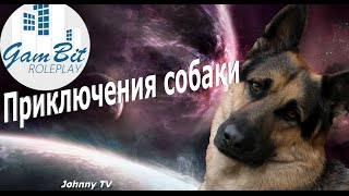 SAMP GamBIt RP [Приключения собаки]