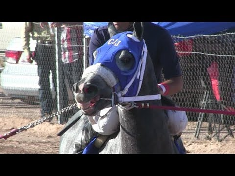 Carreras de Caballos en  Santa Ana 14 de Octubre 2017