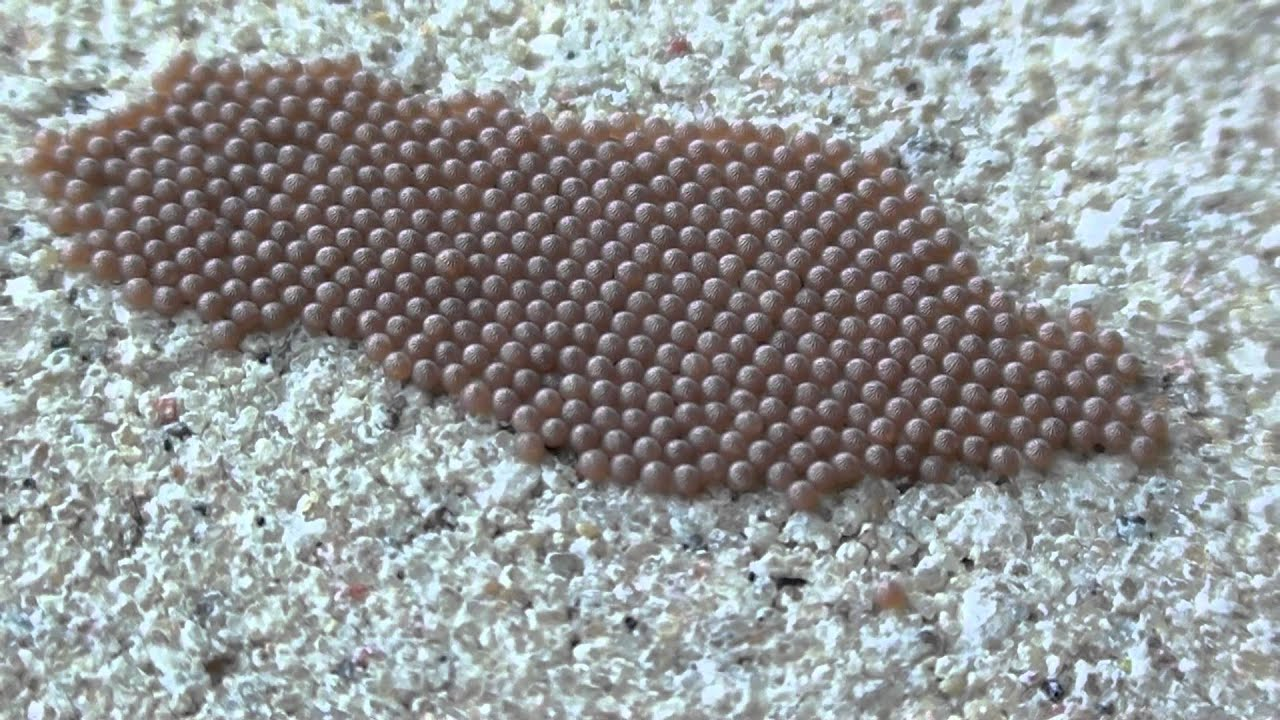 Moth Eggs Noctuidae On Cement Wall Youtube
