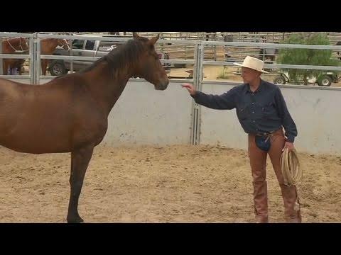 CNN: 'Real' horse whisperer revealed