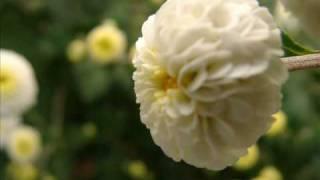 for you.. (KARAOKE) takahashi cover by (Gloria)