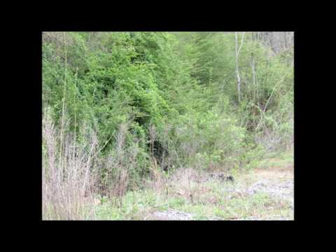 The search for bigfoot , dogman & other cryptids continues