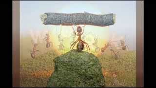 RAS DANIEL RAY LESSON FROM THE ANTS