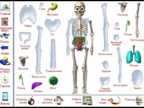 турболетсплей - как устроено моё тело