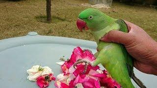 adorable parrot