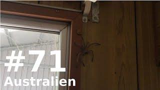 VIEL ABWECHSLUNG ANGESAGT! || AUSTRALIEN || VLOG #71