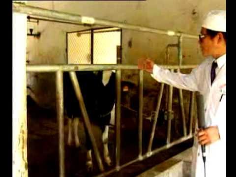 Chăn nuôi bò sinh sản