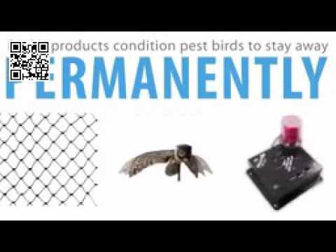 Bird-X Bird Control Experts - About Bird X