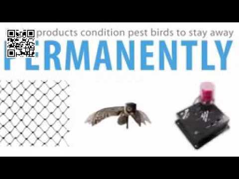 Bird-X Bird Control Experts - About Bird X