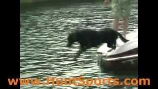"Best Duck Dog Gear Water Dogs ""loadapup"" Boat Doggie Landing Duckhunter Boating"