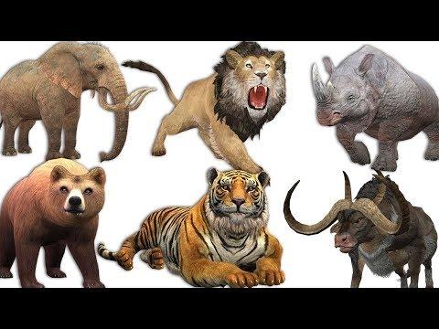 SUARA BINATANG Untuk Anak Anak Lucu │ Nama Dan Suara Hewan Buas; Gajah, Panda, Singa, Kuda, Jerapah