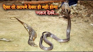 अब ये क्या हो गया। Oh my god Indian cobra (venomous) snake rescue by MURLIWALE HAUSLA