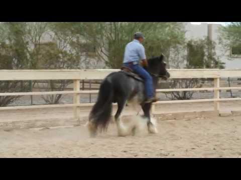 Desert Jewel Harrison Under Saddle
