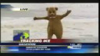 Hurricane Ike - Bear Visits Galveston, Texas