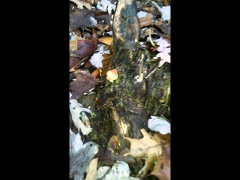 Late Autumn Mushrooms Mp3
