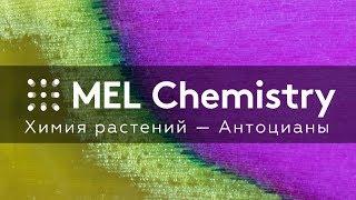 Эксперимент «Антоцианы» из набора «Химия растений»