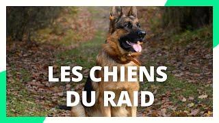 Les chiens policiers du RAID