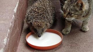 Смешные картинки про кошек и котят Выпуск №64  FUNNY CATS СМЕШНЫЕ КОШКИ