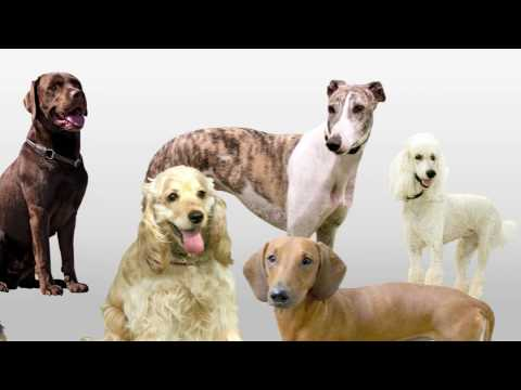 20 Dogs - Funny Song for Kids Naming 20 Different Dogs