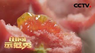 《田间示范秀》 20200504 高手来了·番茄三人行 CCTV农业