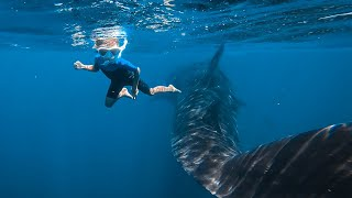 Baixar 5 YR Old Dives with the Biggest Shark in the World