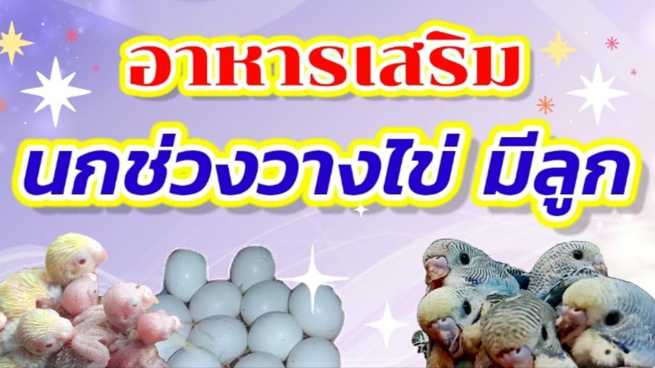 #อาหารเสริมช่วงนกวางไข่มีลูก #อาหารบำรุงนกให้ไข่มีเชื้อ
