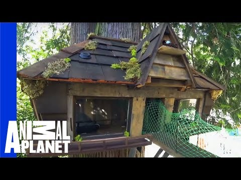 5 Fabulous Pet Friendly Home Transformations   Animal Cribs