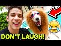 *FUNNY* ANIMAL TRY NOT TO LAUGH CHALLENGE! 🐶😂 | Funny Pets, Dogs, and Animals! w/ MooseCraft