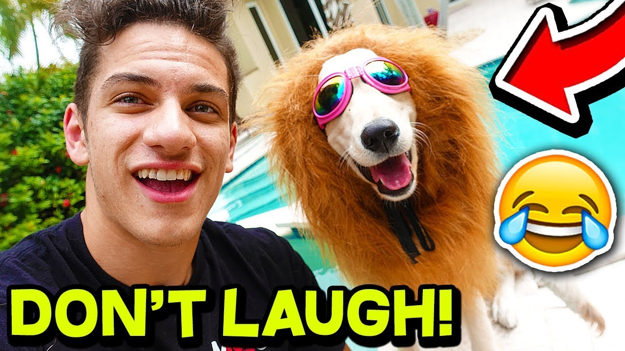 *FUNNY* ANIMAL TRY NOT TO LAUGH CHALLENGE! ?? | Funny Pets, Dogs, and Animals! w/ MooseCraft