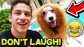*FUNNY* ANIMAL TRY NOT TO LAUGH CHALLENGE!