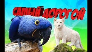 ТОП 10 САМЫХ ДОРОГИХ ДОМАШНИХ ЖИВОТНЫХ В МИРЕ - ANIMAL TOP