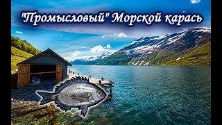 Карась морской. Русская Рыбалка.