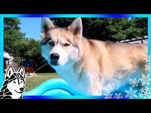 HUSKY POOL TIME | INFLATABLE DOG POOL Review and Giveaway