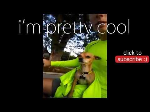 [NachoCam] Homies At The Dog Park - Funny Dog Vines 2
