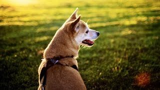 Собака спасла другую собаку от смерти