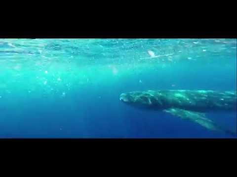 WSORC Marine Conservation Internship