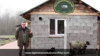 Ege Romanov Koyunu Çiftliği