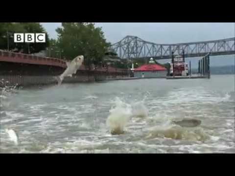 Смотреть клип Fish dancing song онлайн бесплатно в качестве