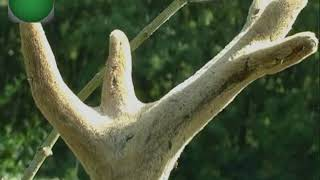 paraziták egy jávorszarvas torkában)