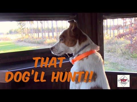 That Dog'll Hunt!