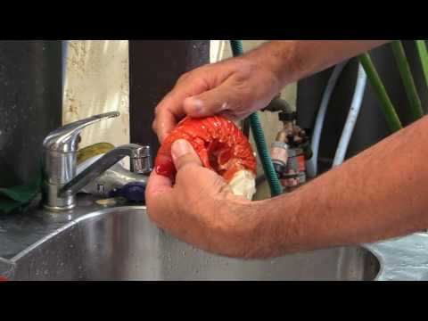 How To Shell Crayfish
