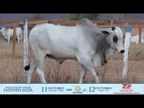 LOTE 76