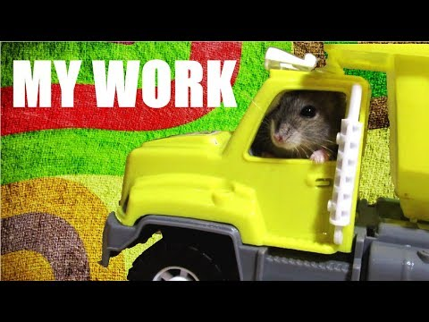 The hamster works as a driver