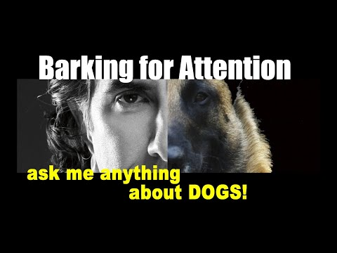 Barking for Attention - ask me anything - Dog Training Video
