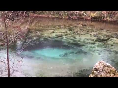 Williford Spring at Econfina Creek Water Management Area