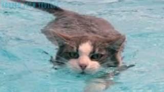 Почему кошки боятся воды?!