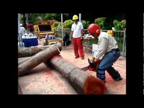 Zenoah Chainsaw Demo on Khaya Logs