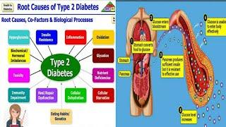 A Brief Explaination Of Type 2 Diabetes.