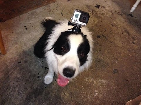 GoPro:The Evolution, GoPro mounted on the head of frisbee dog