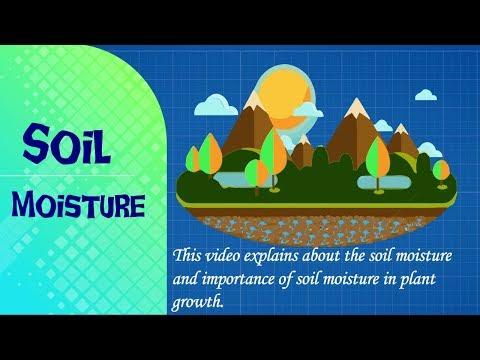 Soil Moisture // Soil Water // Importance of Soil Moisture // Soil Moisture for Plant //